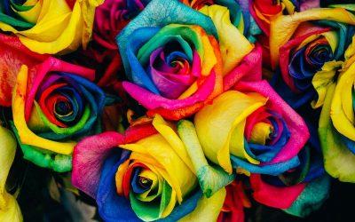 Ben je boos, pluk een roos