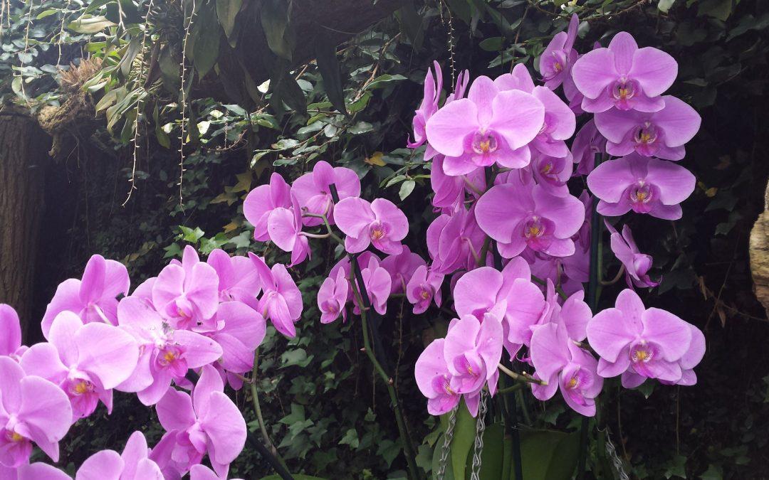 De Orchideeën Hoeve: Het perfecte uitstapje met kinderen