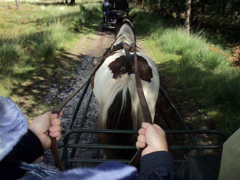 Vrijgezellenfeest met paard en wagen